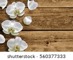moon orchid on natural brown... | Shutterstock .eps vector #560377333