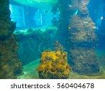africarium is oceanarium... | Shutterstock . vector #560404678