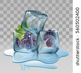 ice cube with grape. vector... | Shutterstock .eps vector #560502400