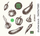 hand drawn vegetable sketch... | Shutterstock .eps vector #560567080