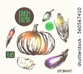 hand drawn vegetable sketch... | Shutterstock .eps vector #560567410