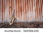 Jazz Musical Instrument...