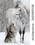 Small photo of The dog sits next to the horse. Alaskan Malamute with Orlovsky Trotter.