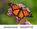 Stock photo orange butterfly 560609749