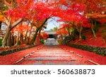 autumn in japan kyoto  entrance ...   Shutterstock . vector #560638873