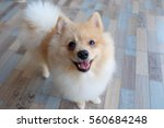 Stock photo cute puppy 560684248