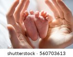 father holds his little baby... | Shutterstock . vector #560703613