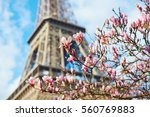pink magnolia flowers in full... | Shutterstock . vector #560769883