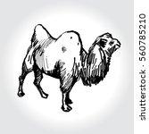 bactrian camel image. pencil... | Shutterstock .eps vector #560785210