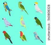 set of color flat parrots icons ... | Shutterstock .eps vector #560808328