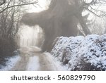 winter | Shutterstock . vector #560829790