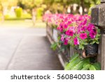 fountain flower in the path way | Shutterstock . vector #560840038
