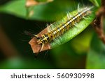 hairy caterpillar on the leaf | Shutterstock . vector #560930998