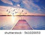 calm summer evening  wooden... | Shutterstock . vector #561020053