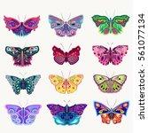 exotic unusual butterflies ... | Shutterstock .eps vector #561077134