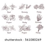 herbs and spices set. engraving ... | Shutterstock .eps vector #561080269