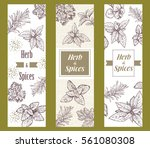 herbs and spices label.... | Shutterstock .eps vector #561080308