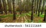 northern michigan forest... | Shutterstock . vector #561111664