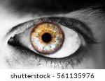 Beautiful Human Eye  Macro ...