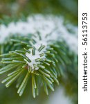 Snow Covered Pine Tree Branches ...