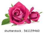 Stock photo pink rose flower bouquet isolated on white background cutout 561159460