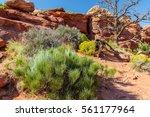 Utah Desert Plants