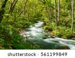 japanese landscape   oirase... | Shutterstock . vector #561199849