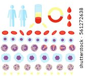 blood count test infographic... | Shutterstock .eps vector #561272638