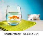 charming cute white kitten... | Shutterstock . vector #561315214