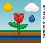 flower water absorbing   Shutterstock .eps vector #56137288