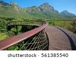 elevated walkway in the... | Shutterstock . vector #561385540