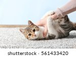 Stock photo cute funny cat playing with owner while lying on carpet at home 561433420