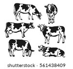 Holstein Cattle Silhouette Set...