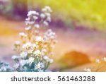 white flowers in soft color and ... | Shutterstock . vector #561463288