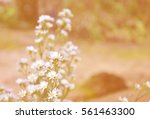 white flowers in soft color and ... | Shutterstock . vector #561463300