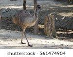 Image Of A Emu On The Ground I...