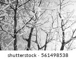 beautiful white frost on... | Shutterstock . vector #561498538