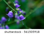Beautiful Bluebells Flowers At...