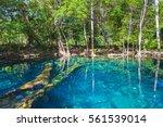 small still lake in dark forest ... | Shutterstock . vector #561539014