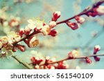 beautiful spring flowers   Shutterstock . vector #561540109