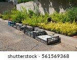 Preparation Of Seedlings And...