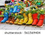colorful old boots used as...   Shutterstock . vector #561569404