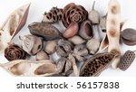Austrailian Seed Pod