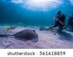 A Scuba Diver Captures A...