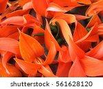 bustard teak | Shutterstock . vector #561628120