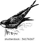 bird apodes   Shutterstock .eps vector #56176267