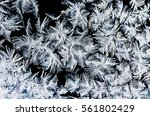 crystal white frost pattern on... | Shutterstock . vector #561802429