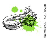 hand drawn celery. can be used... | Shutterstock .eps vector #561842788