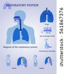respiratory system  diagram of... | Shutterstock .eps vector #561867376