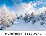 winter forest with thick layer... | Shutterstock . vector #561869140